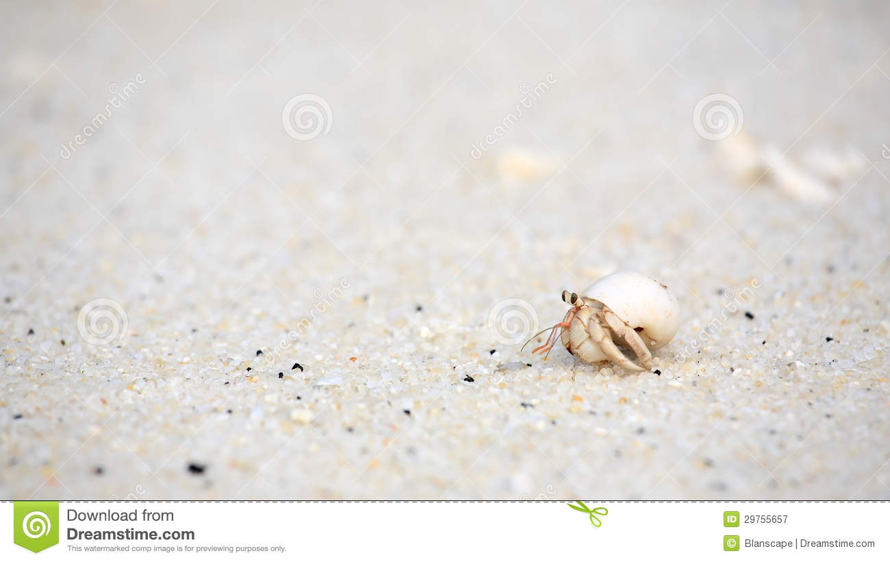 Hermit Crab On Sand Beach Royalty Free Stock Photography ...