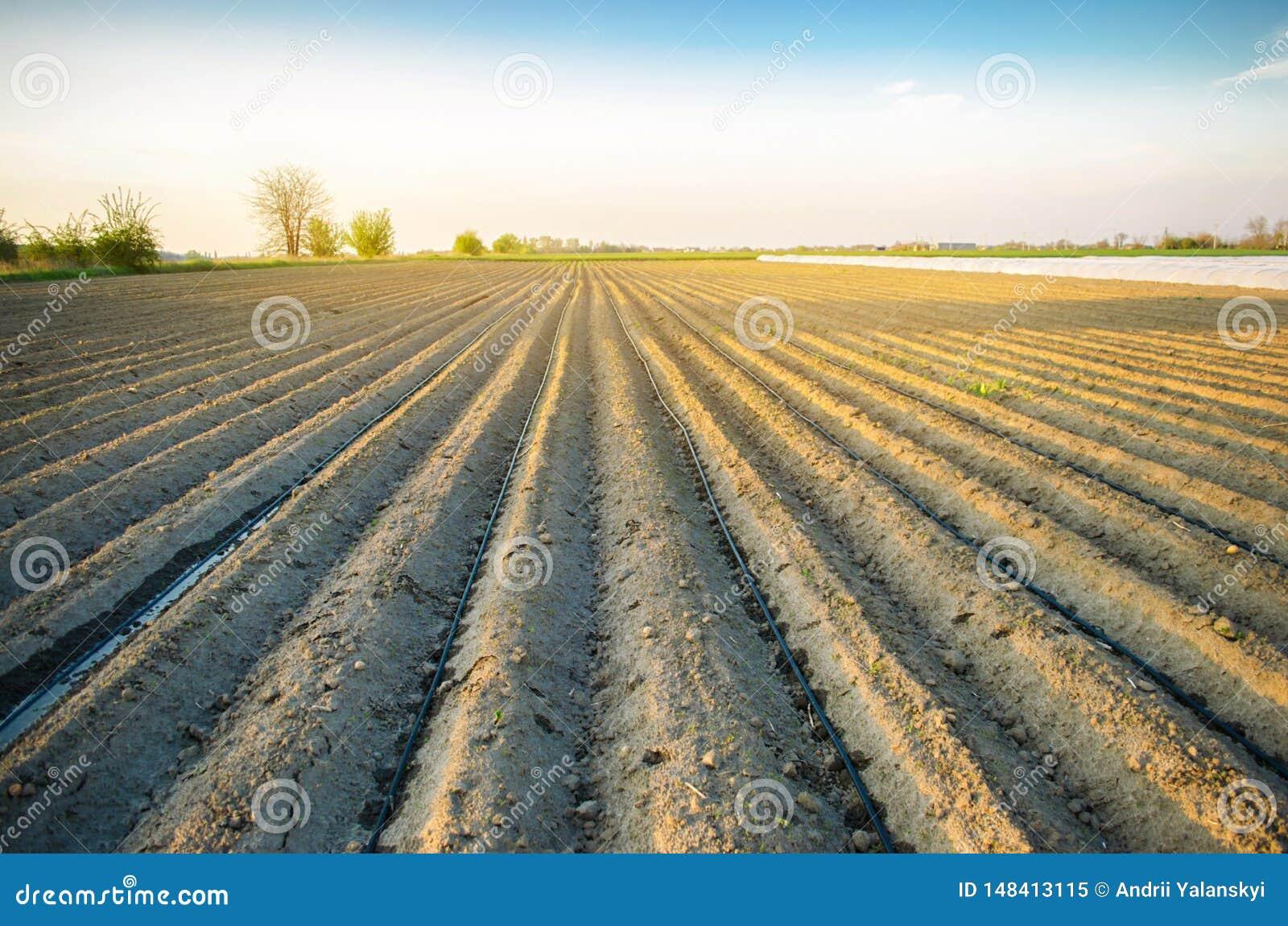 Hermosa vista del campo arado en un d?a soleado Preparaci?n para plantar verduras Agricultura Tierras de labrant?o Selectivo suav