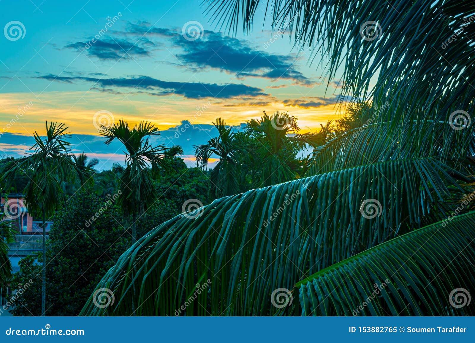 Hermosa vista del cielo de la puesta del sol detrás de las palmeras
