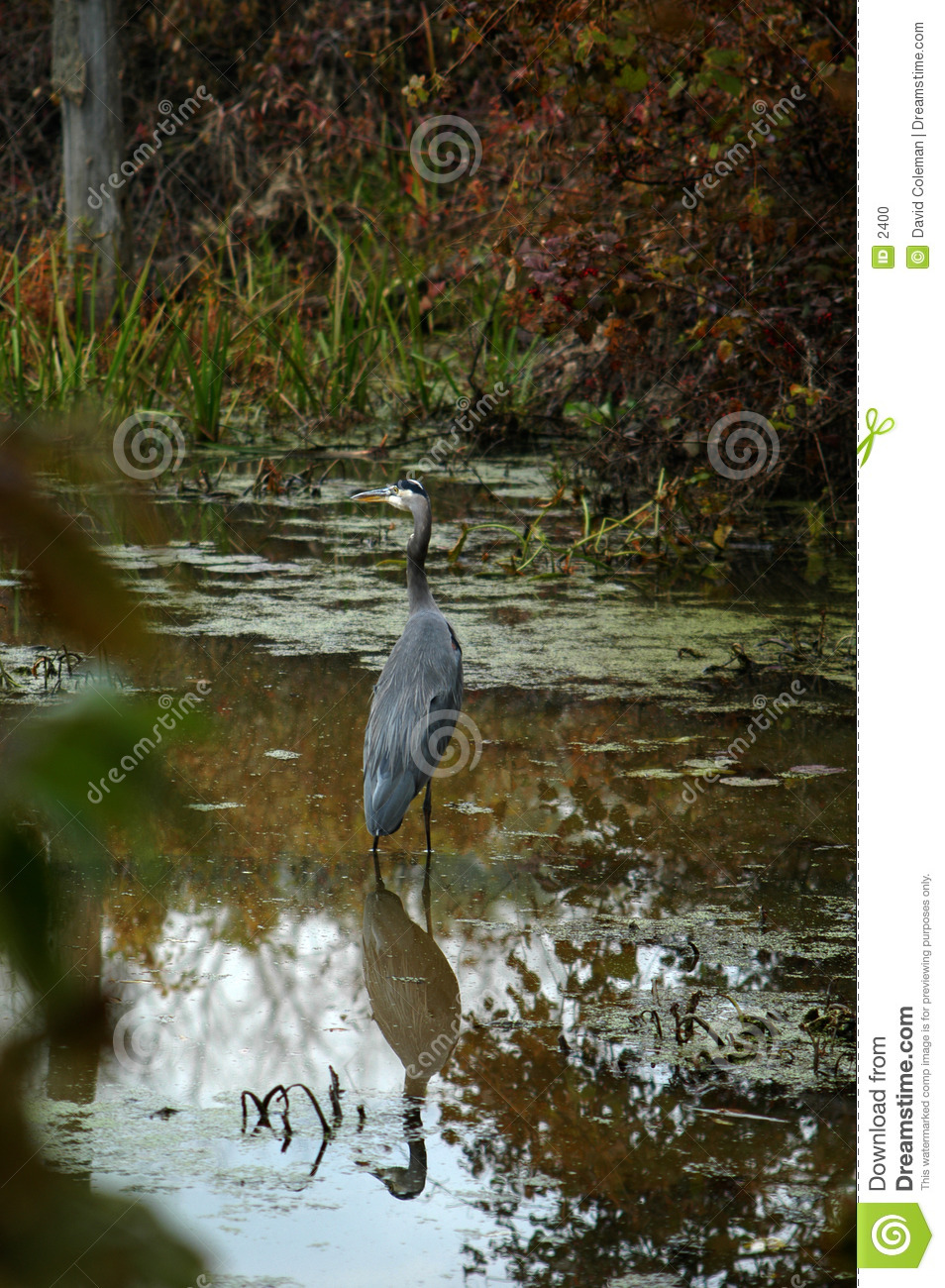 Heron in Canal