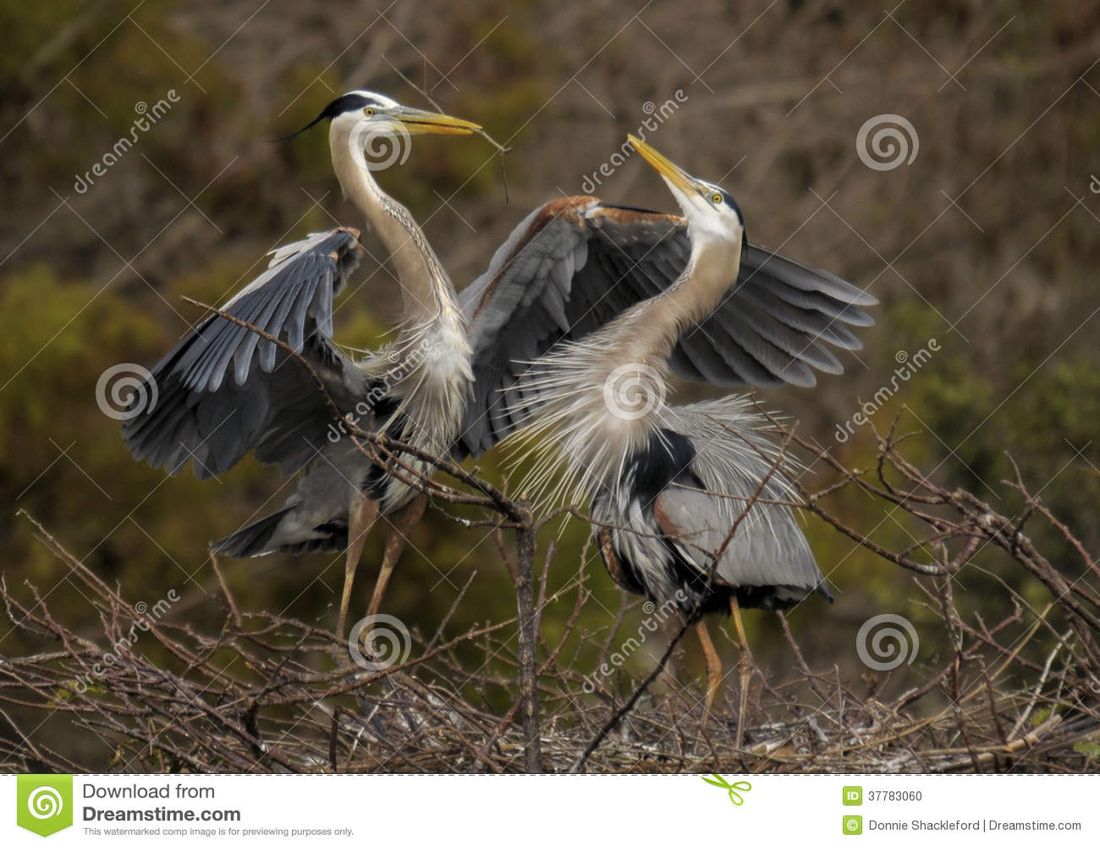 Heron Hug