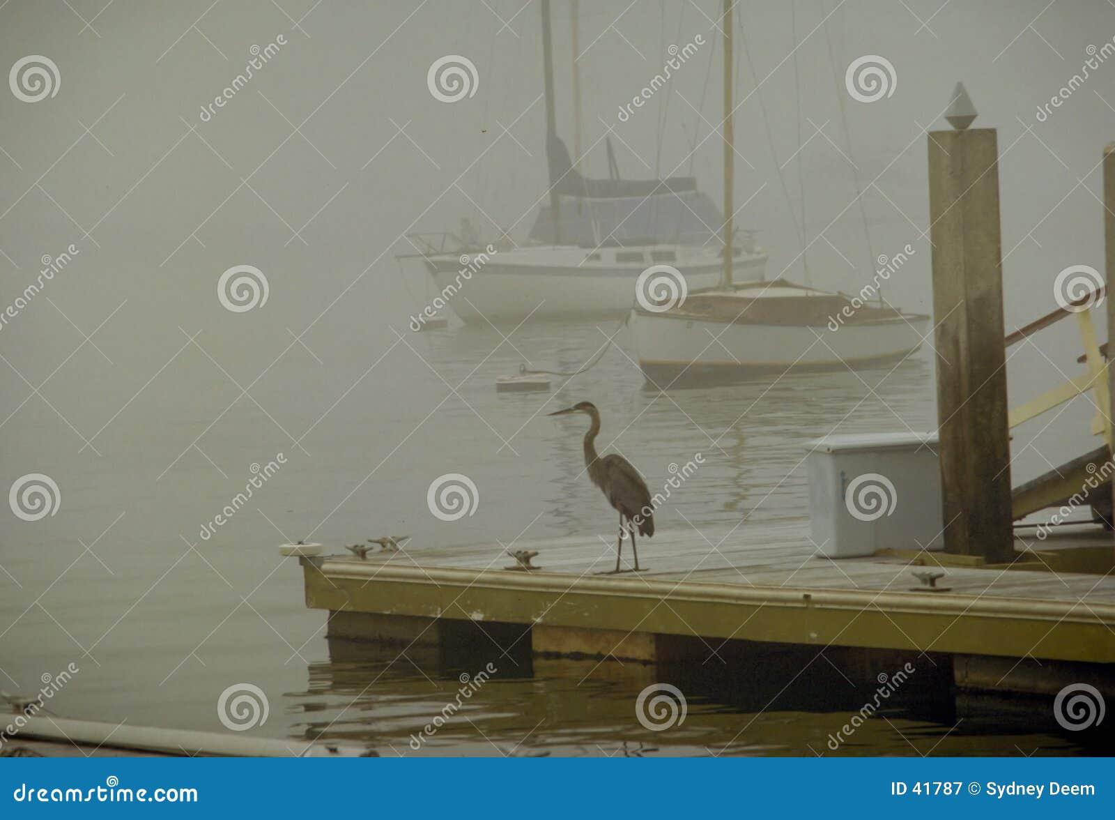 - heron mgły