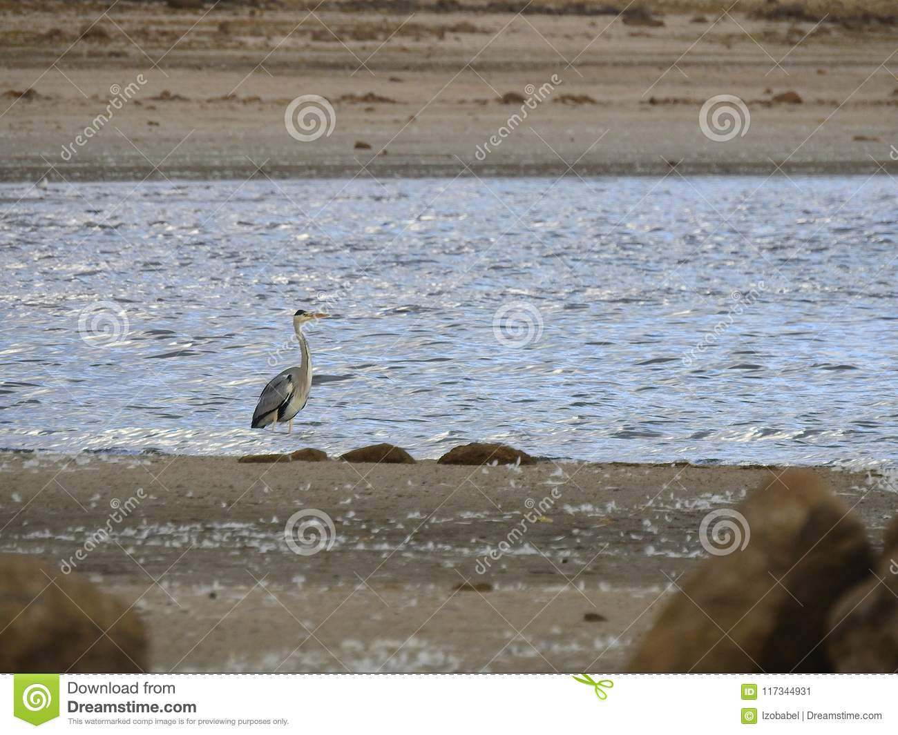 The heron rest