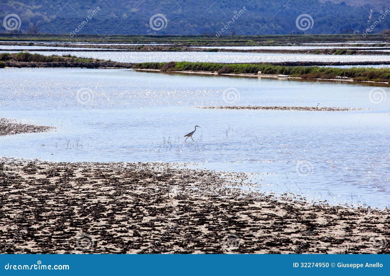 Heron in the salt evaporation ponds in secovlje stock for Design of evaporation pond