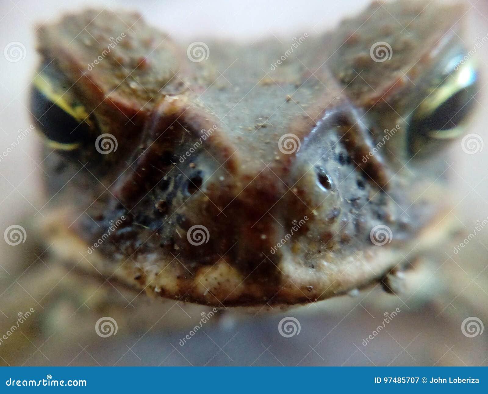 Herr Toad