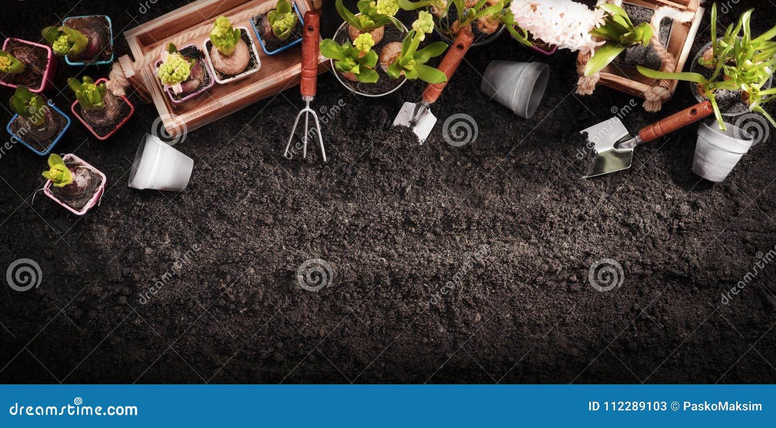 Herramientas que cultivan un huerto y plantas El jardín de la primavera trabaja concepto