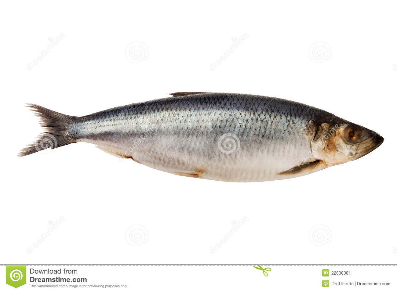 Herring fish stock image image 22000381 for Image of fish
