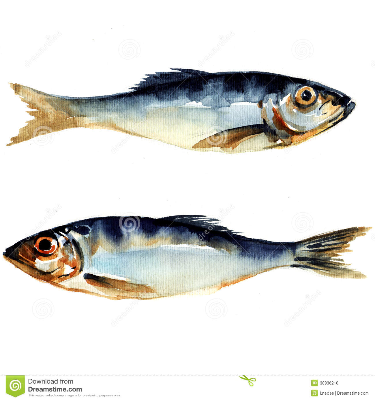 Herring fish watercolor painting stock illustration for How to paint a fish