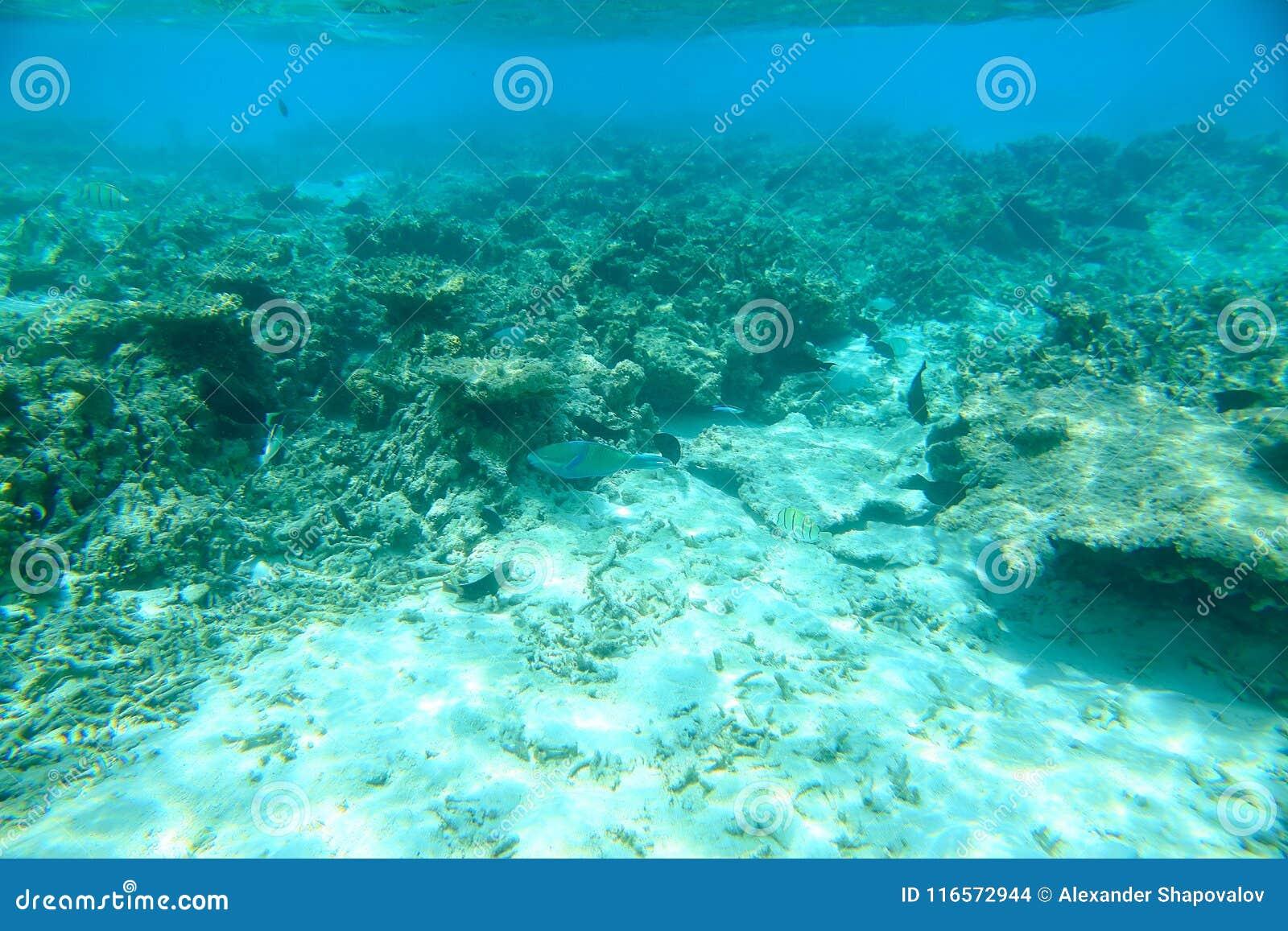 Herrliche Ansicht über Korallenriffe und weißen Sand unter Wasser Seeschildkröte nahe Gili Meno Malediven, der Indische Ozean,