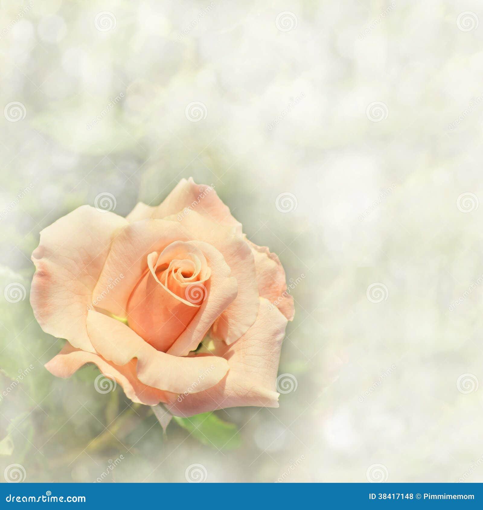 Herrliche hellorangee Rose auf einem träumerischen Hintergrund