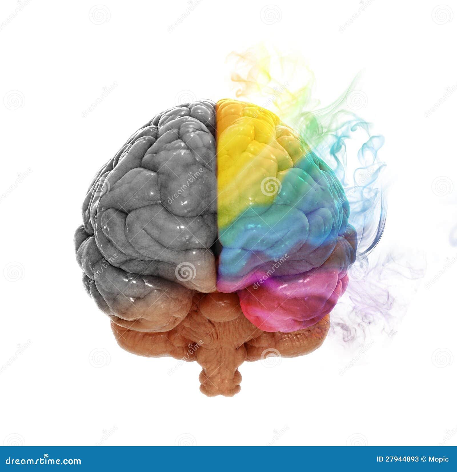 Hersen de hemisfeerconcept van de creativiteit