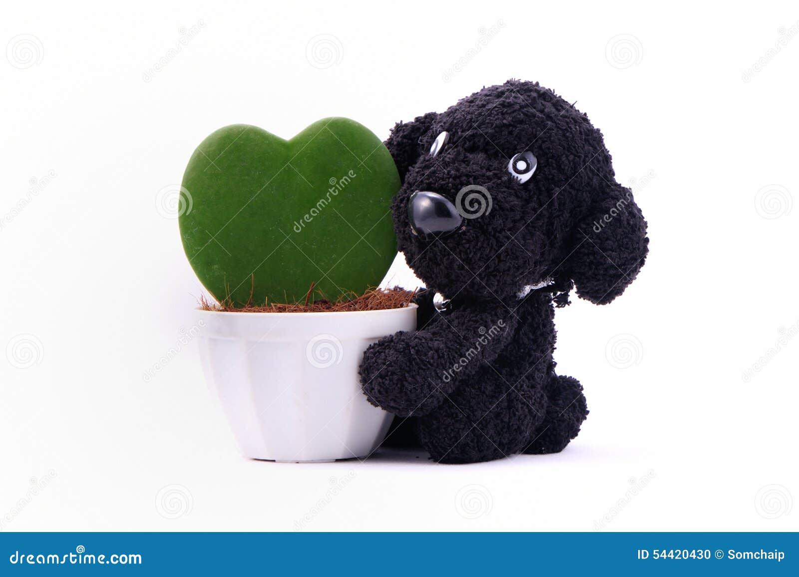 Herz f rmige anlage in einem blumentopf mit hund stockfoto for Blumentopf tiere