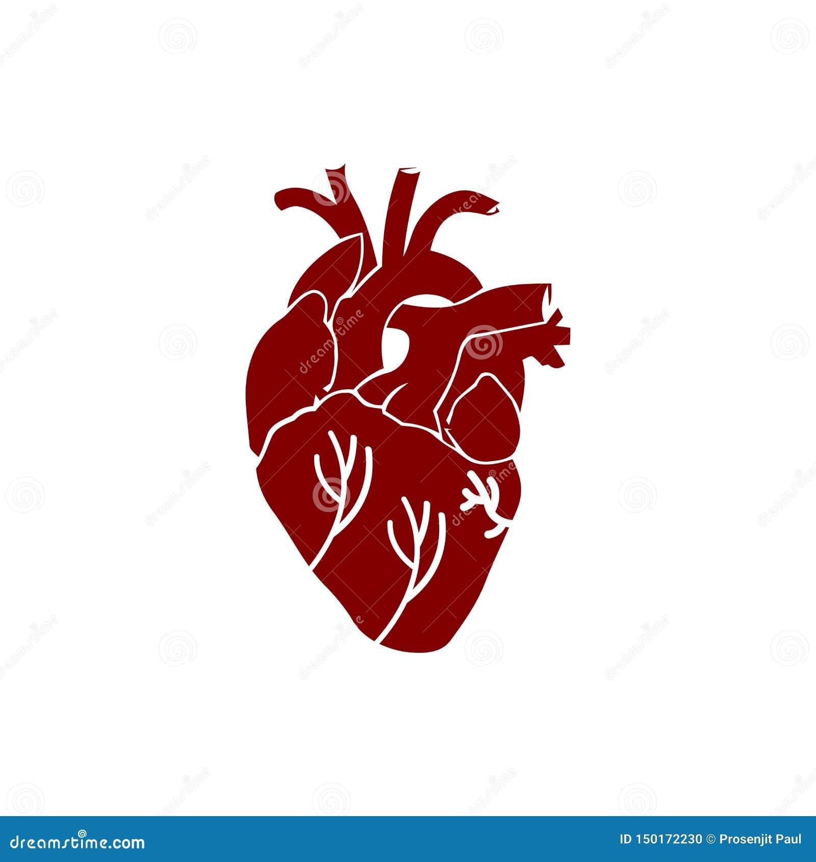Herz Menschlich