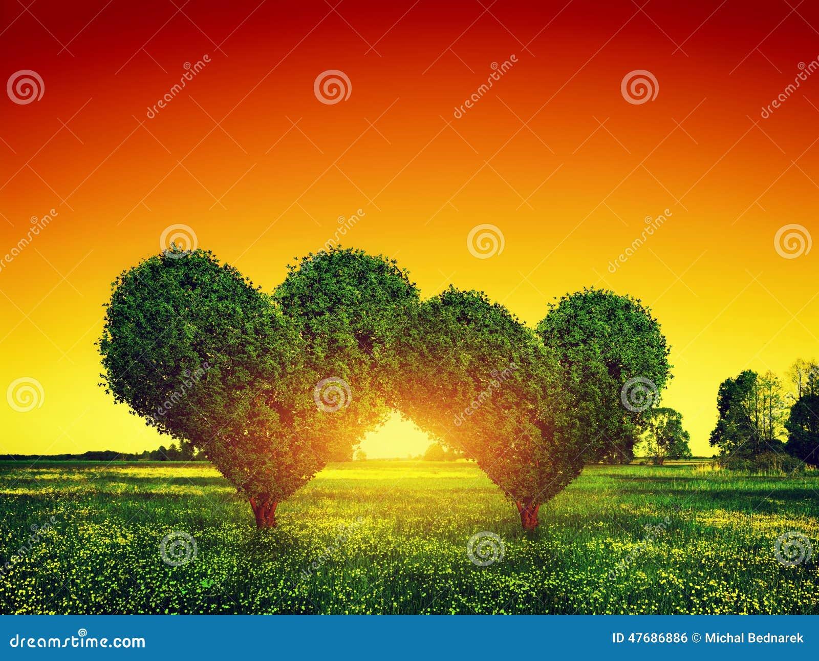 Herzform-Baumpaare auf Gras bei Sonnenuntergang Liebe