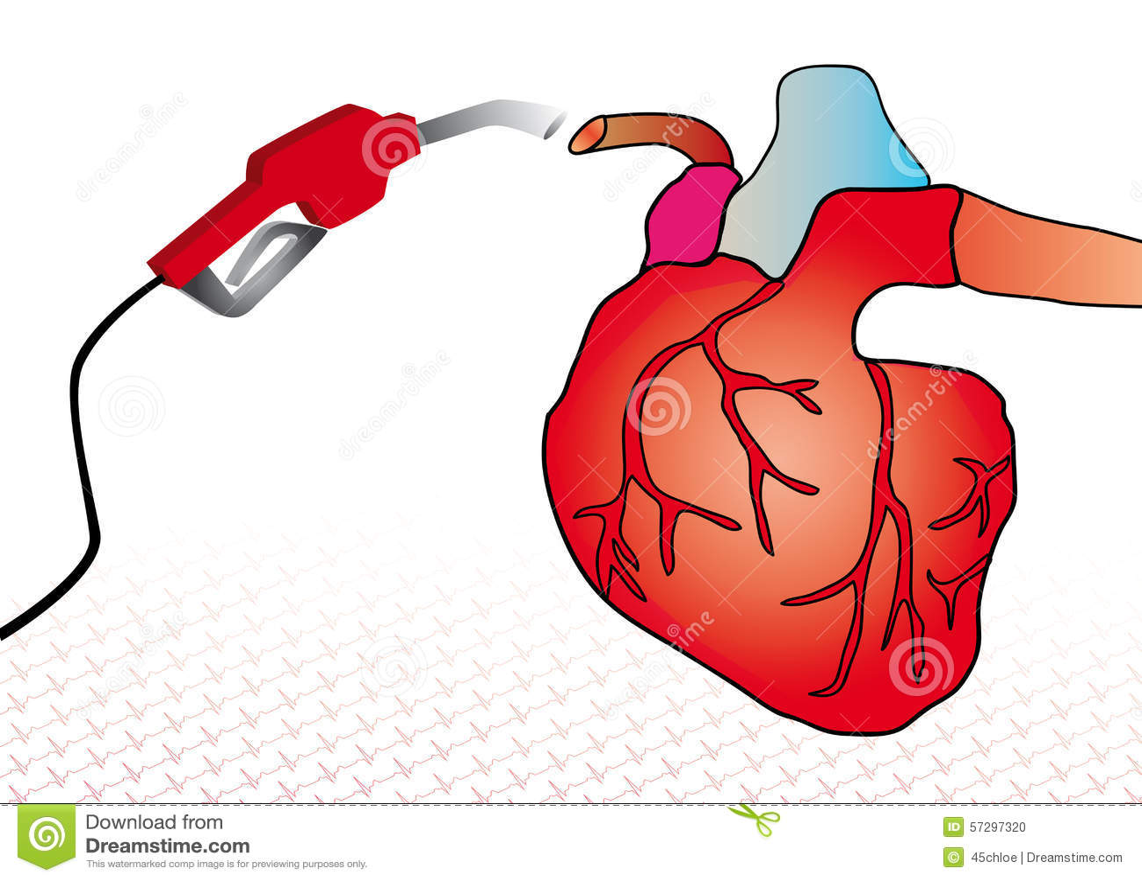 Niedlich Herzsystem Zeitgenössisch - Menschliche Anatomie Bilder ...