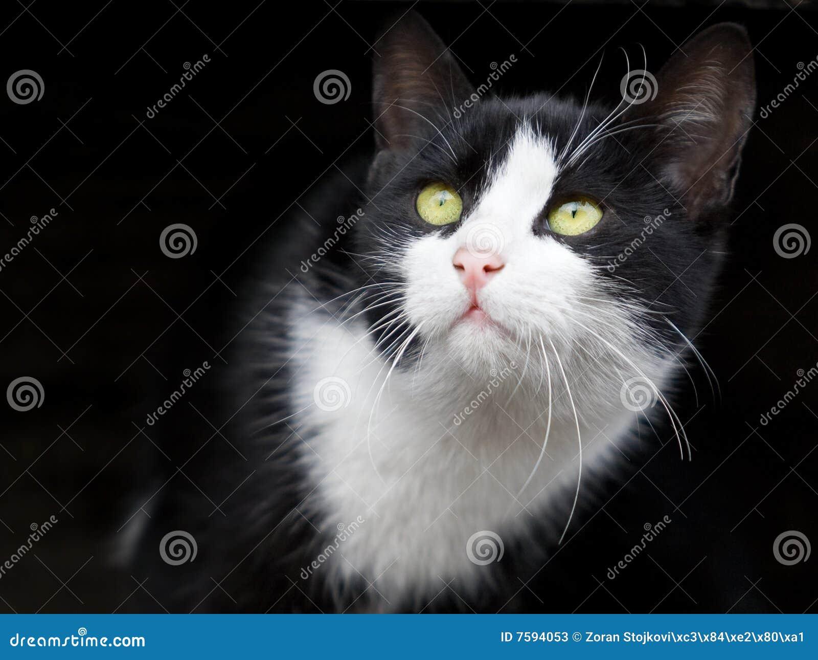 Het aanbiddelijke kleine kat kijken