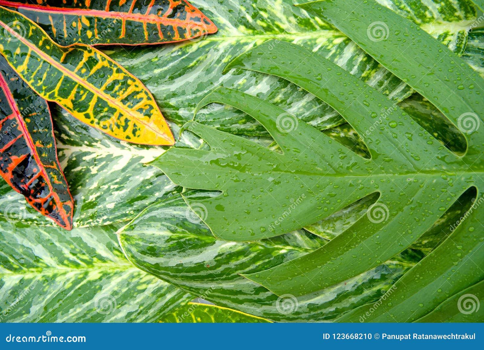 Het abstracte natuurlijke concept van de bladerentextuur