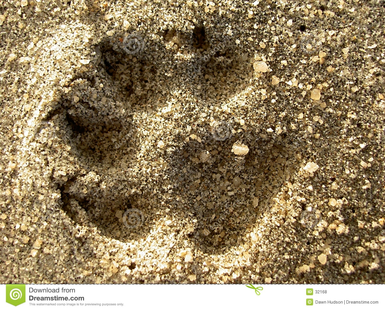 Het Af:drukken van de hond in het Zand