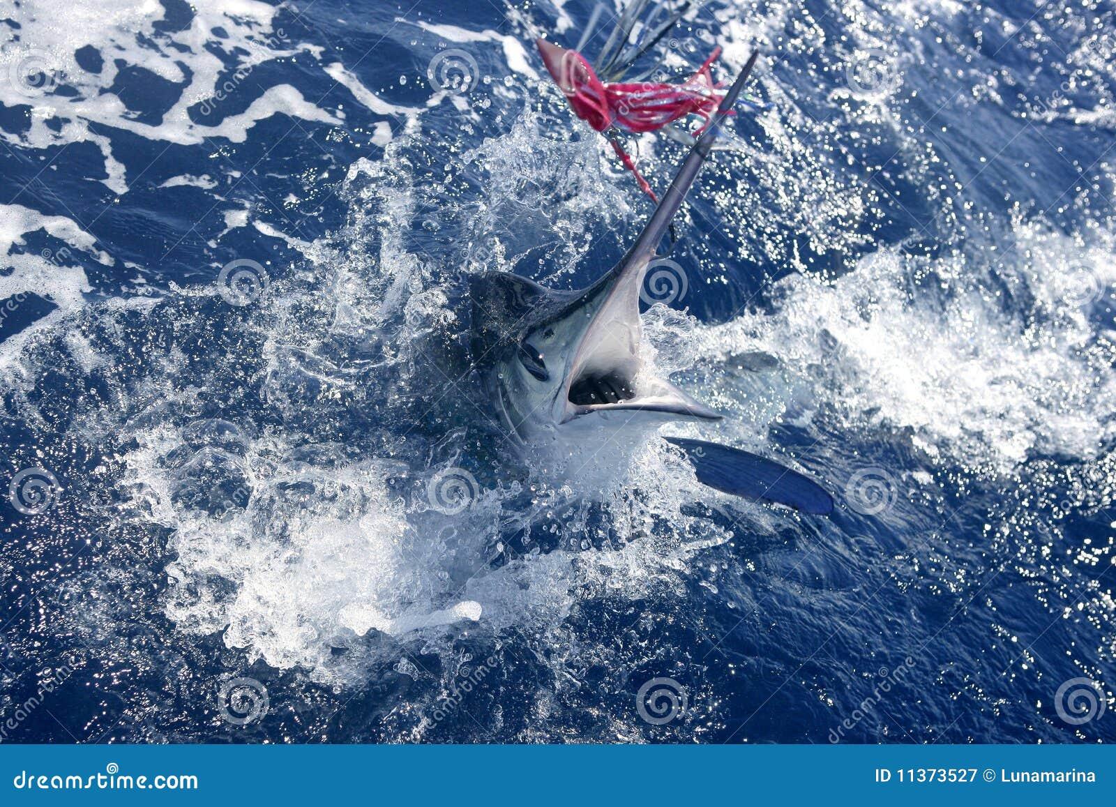 Het Atlantische witte marlijn grote spel sportfishing