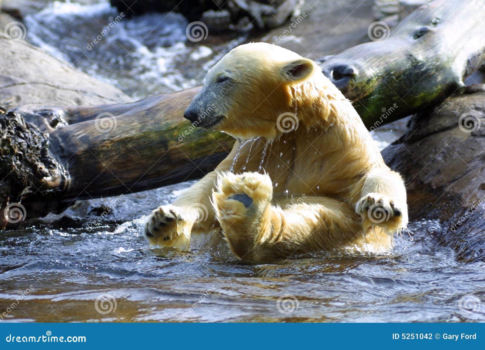 Het bad van de ijsbeer stock foto afbeelding bestaande uit baby 5251042 for Foto in het bad