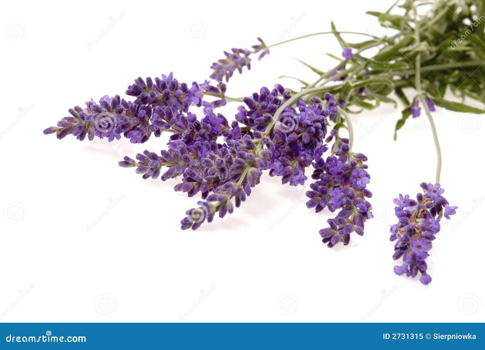 Het bad van de lavendel stock afbeelding afbeelding bestaande uit ontspanning 2731315 for Foto in het bad