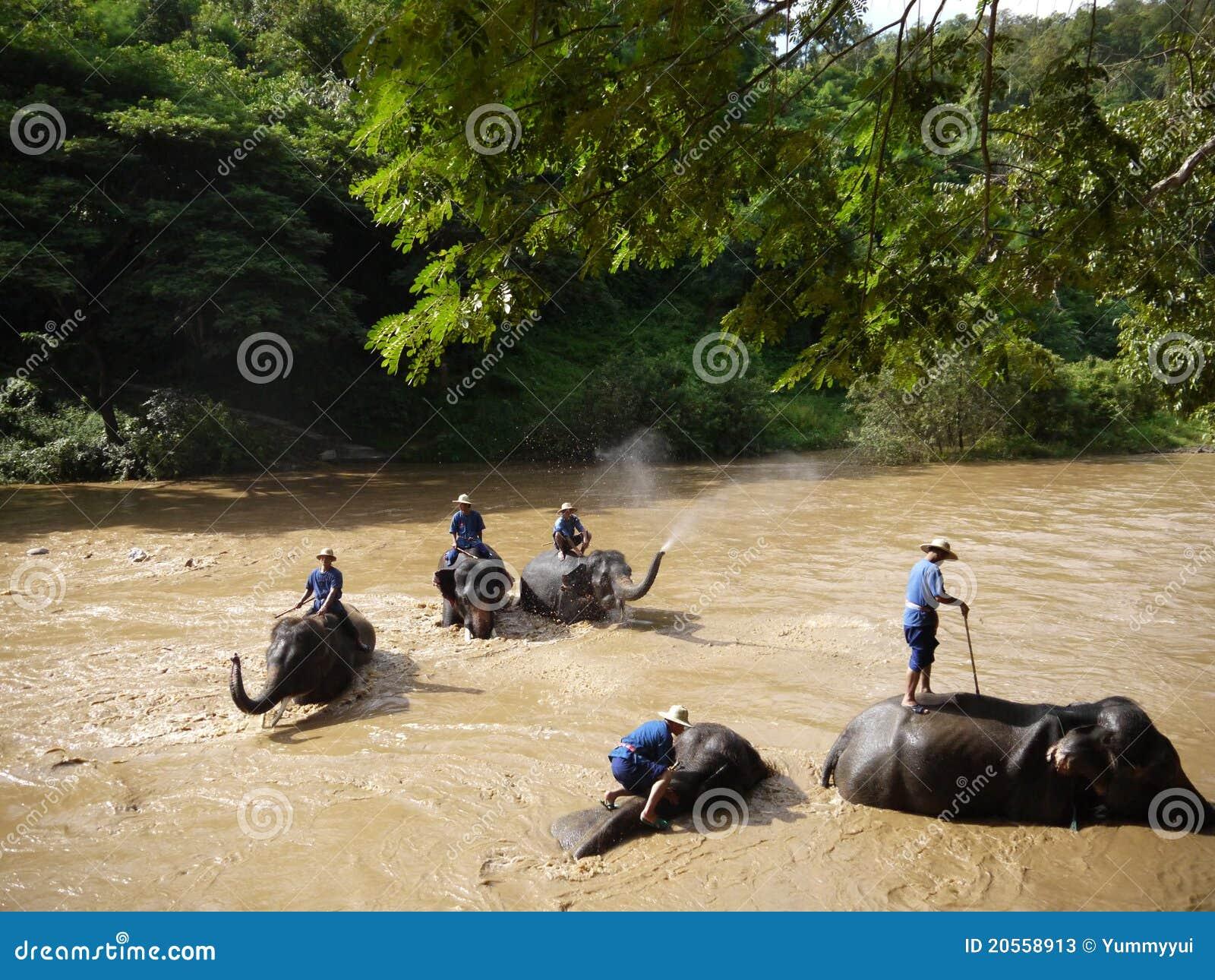 Het bad van de olifant redactionele stock foto afbeelding 20558913 for Foto in het bad