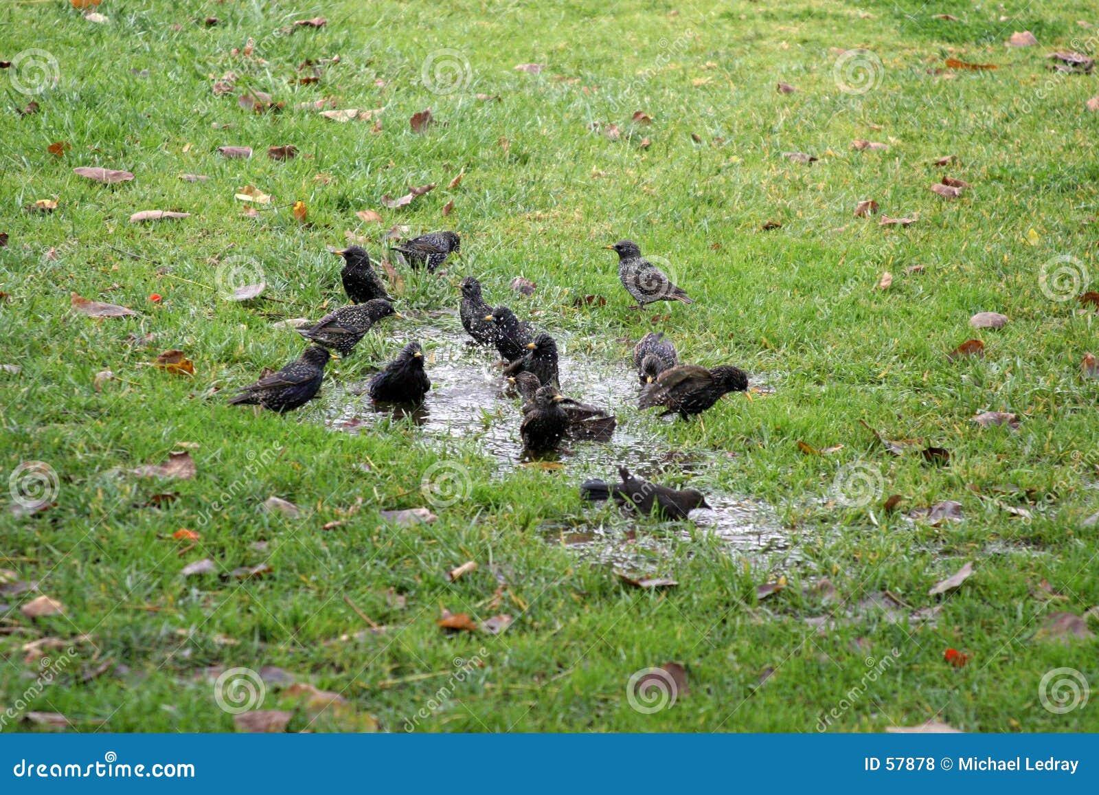Het bad van de vogel