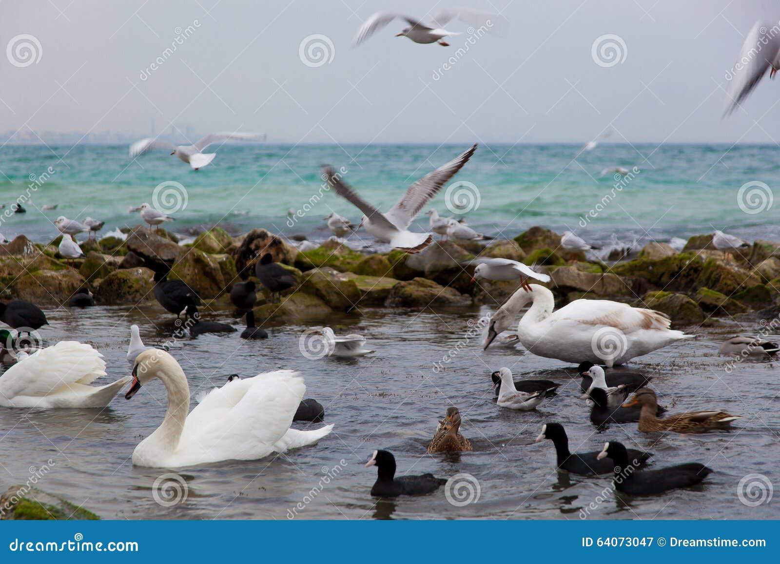 Het bad van nice voor zeevogels dichtbij de zwarte zee stock foto afbeelding 64073047 for Foto in het bad