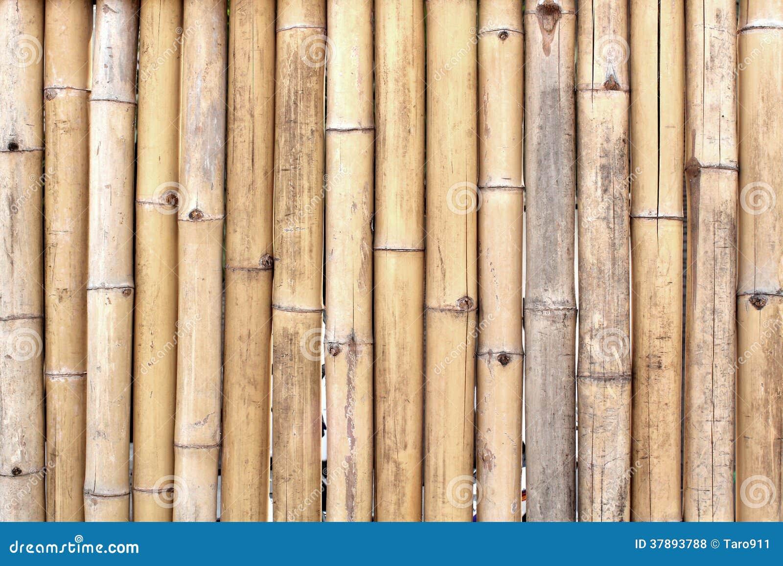 Het bamboe besluipt patroon
