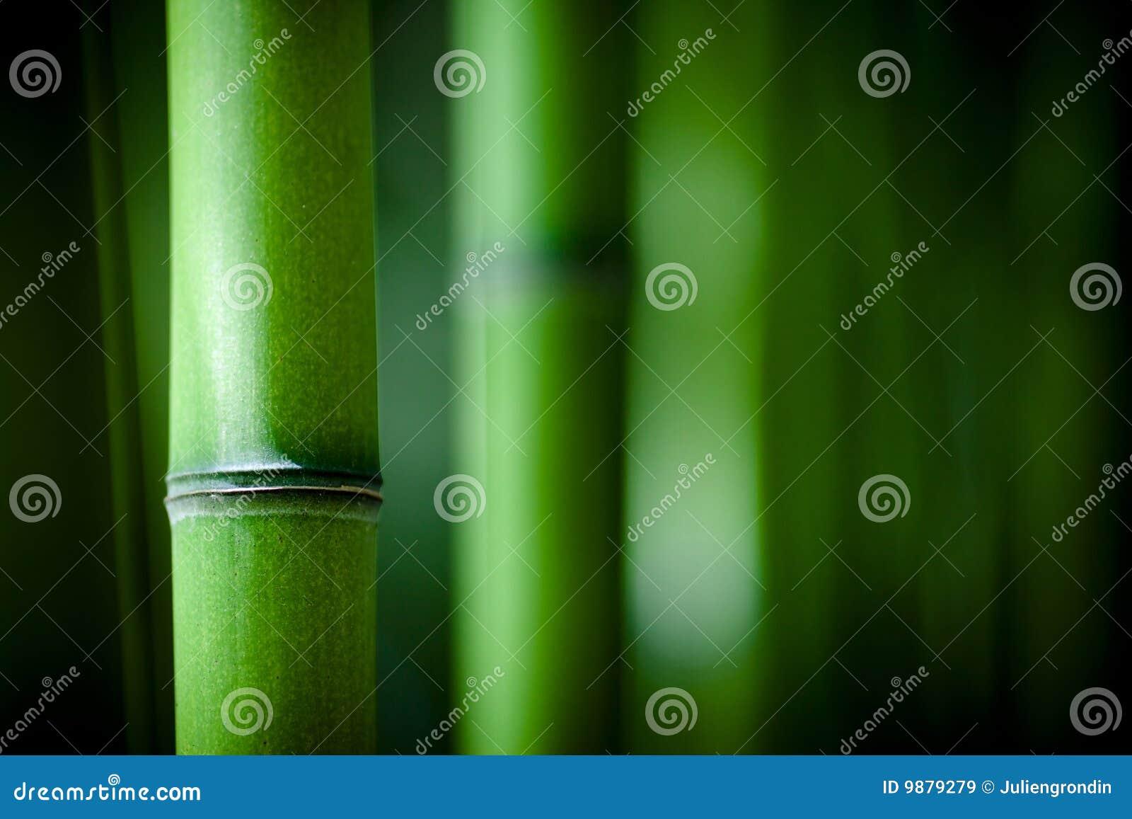 Het bamboe van Zen