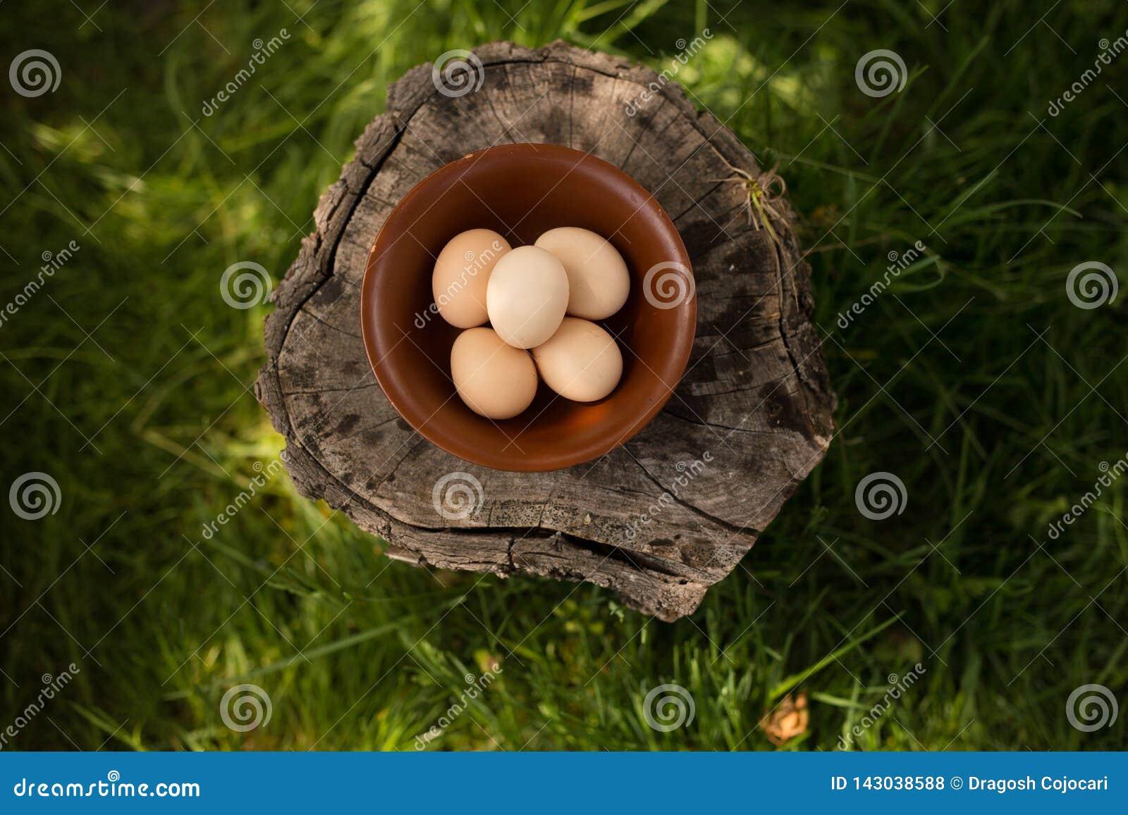Het bebouwde beeld van de ruwe eieren van de landbouwbedrijfkip schikte in een plaat op een houten boomstam Horizontaal beeld Bio