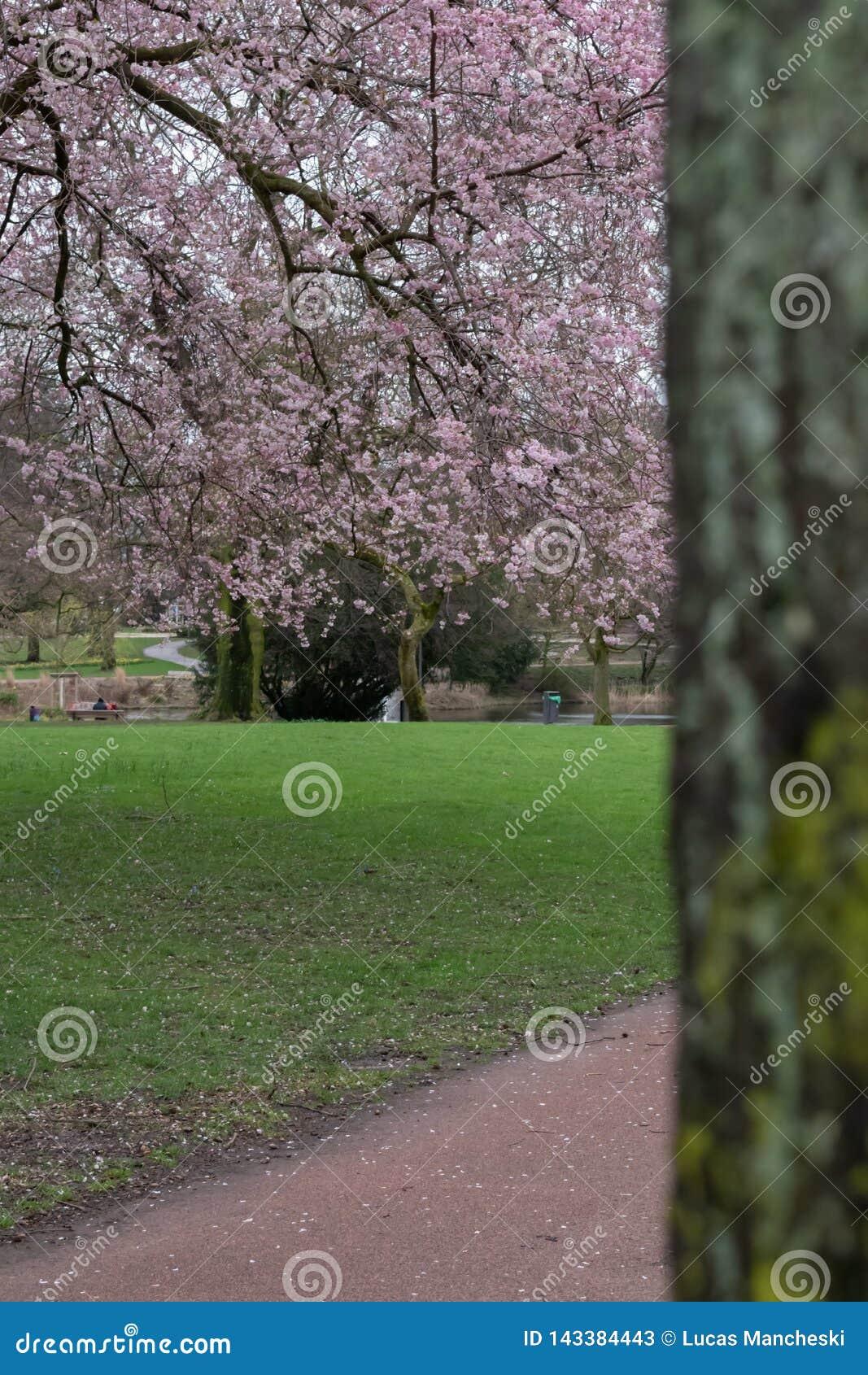 Het bekijken uit stadspark