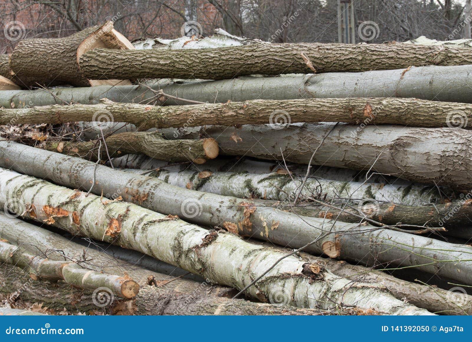 Het besnoeiingshout opent bos het programma