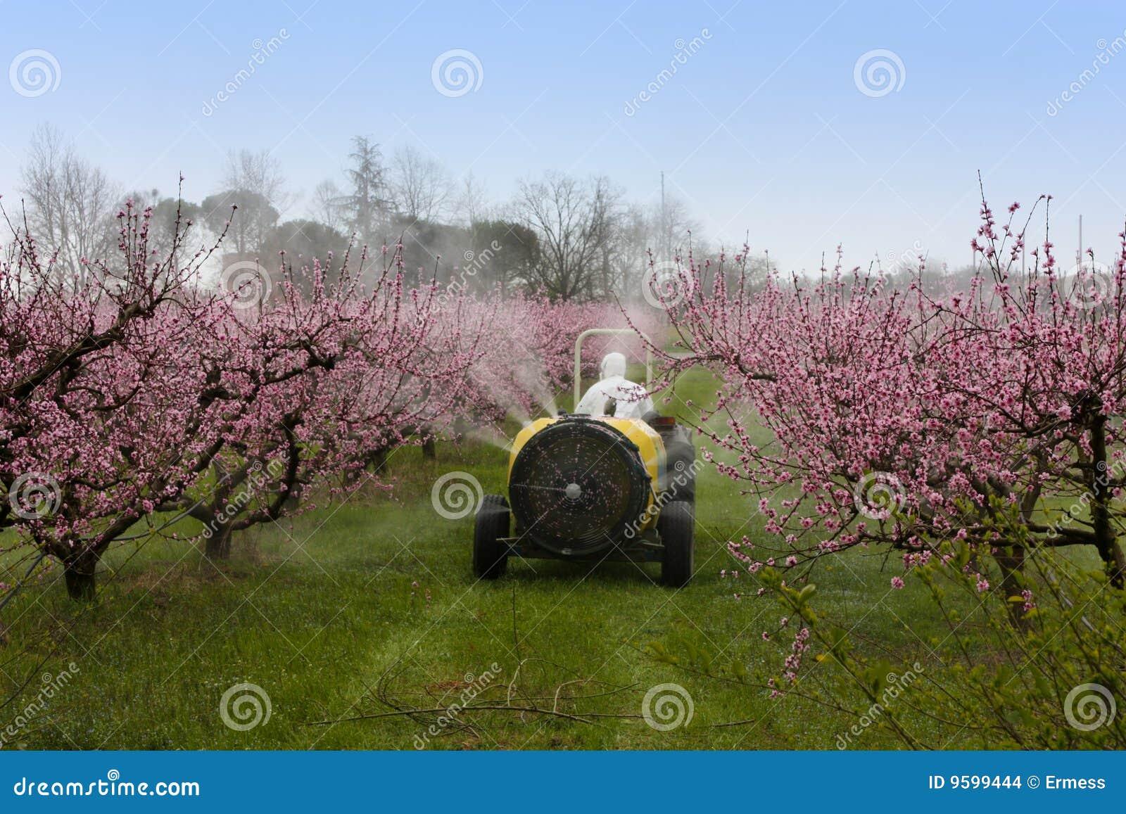 Het bespuiten van perzik
