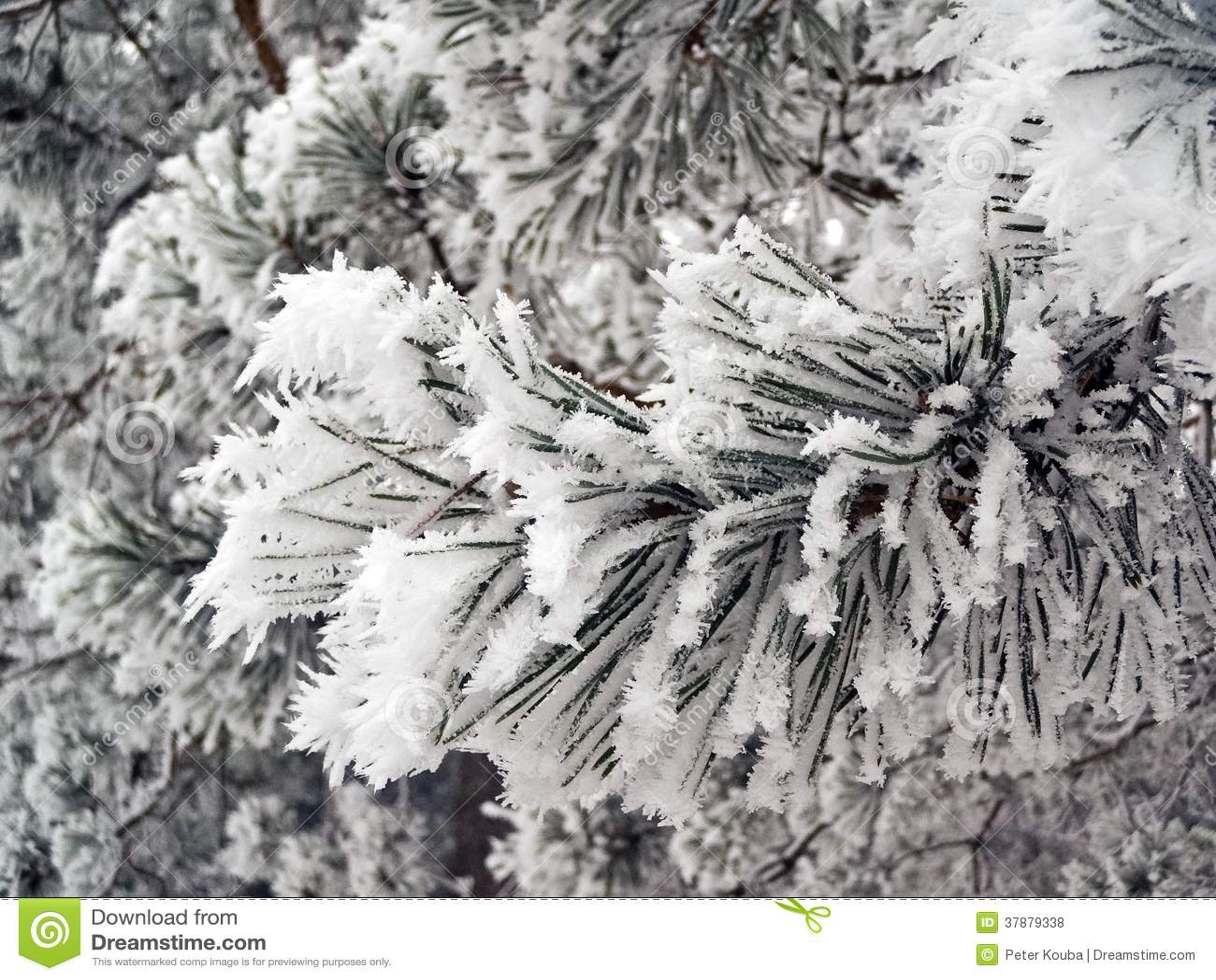 Het bevriezen op een boomtak in de wintertijd.