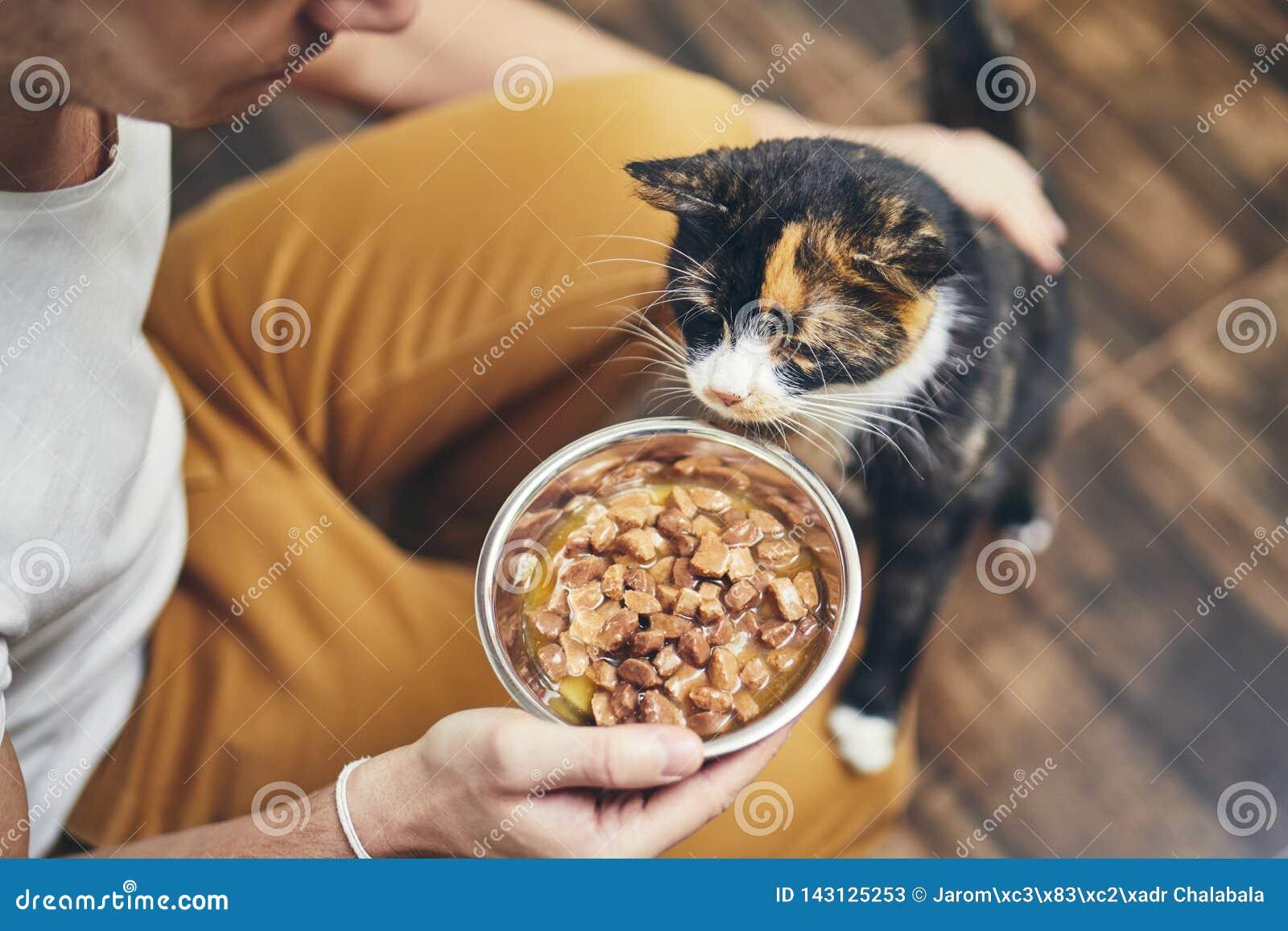 Het binnenlandse leven met kat