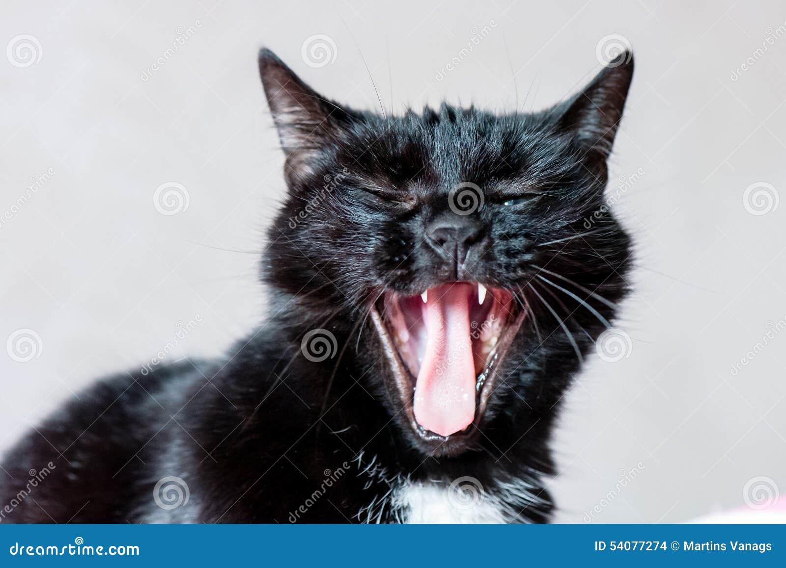 Het binnenlandse schot van het kattenclose-up