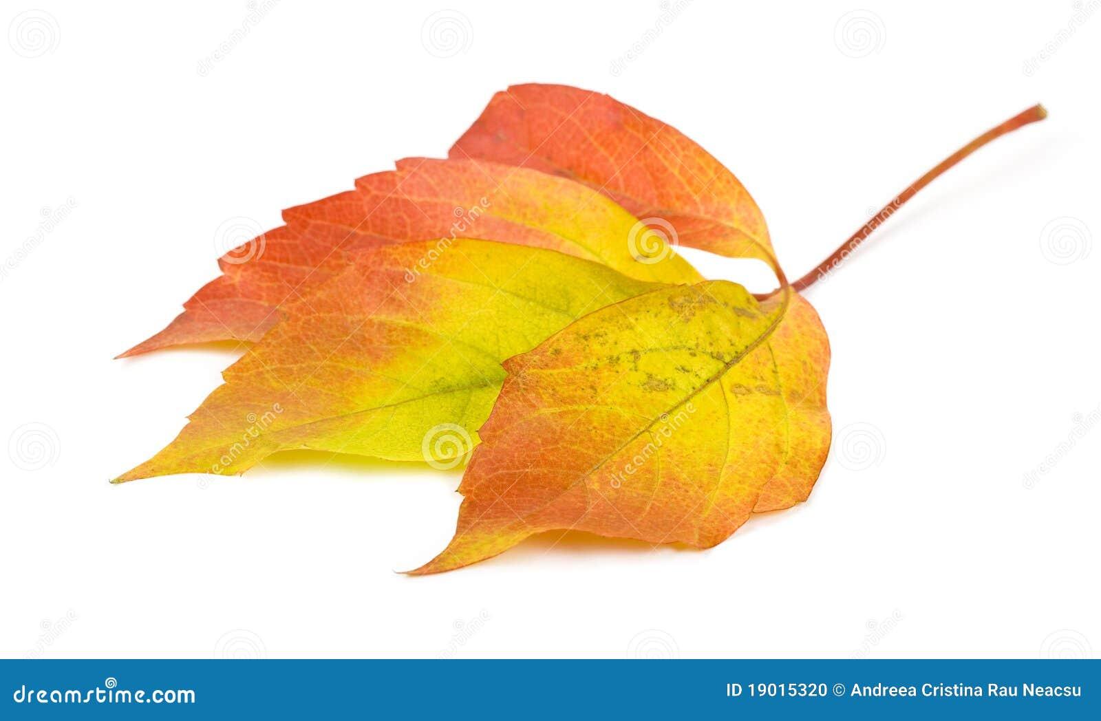 Het blad van de herfst