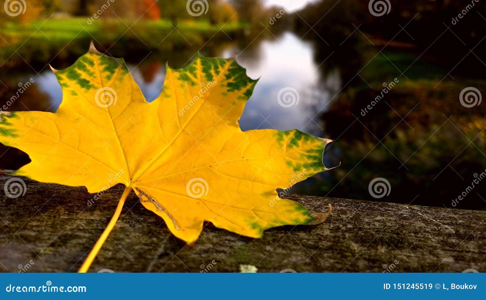 Het blad van de herfst De grootte van het beeld XXXL