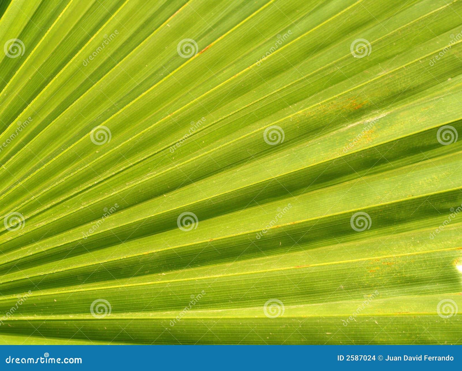 Het blad van de palm