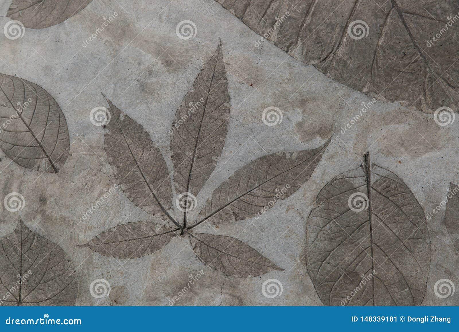 Het bladdetail werd gestempeld op de concrete oppervlaktevloer