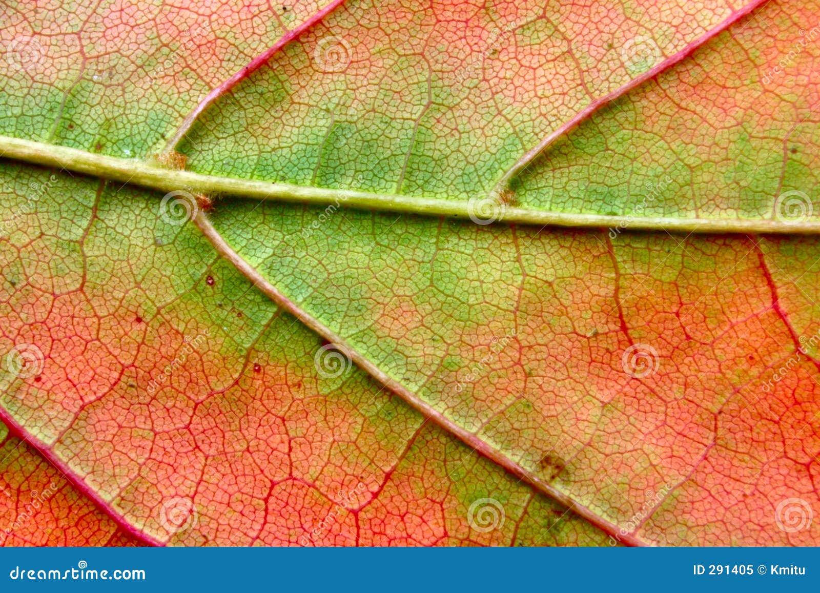 Het bladmacro van de herfst