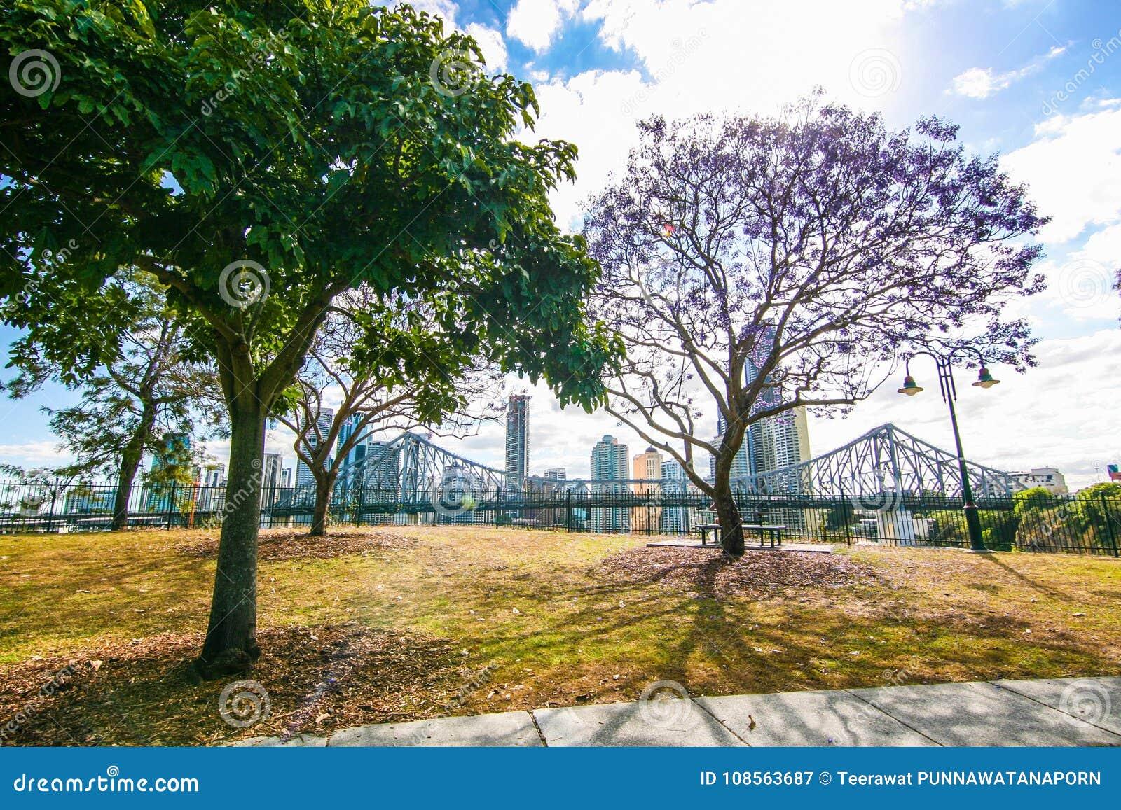 Het bloeien Jacaranda in Brisbane Australië