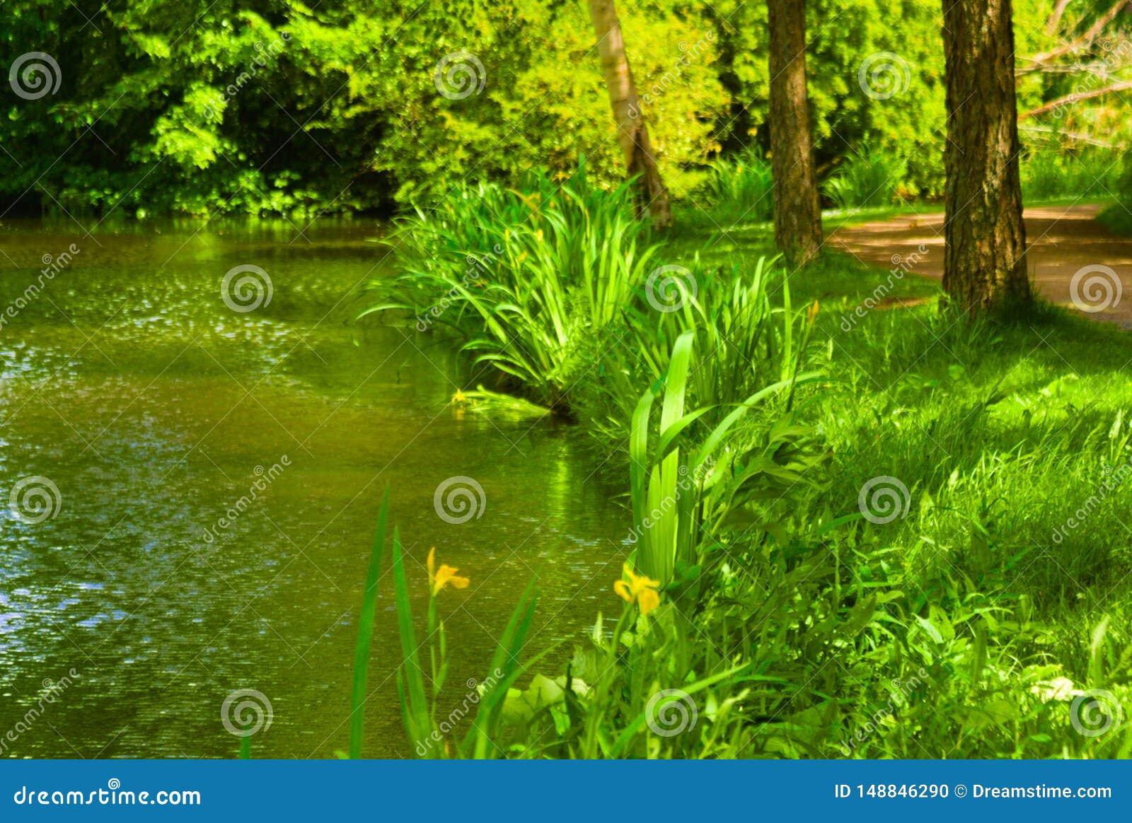 Het bloeien van gras in de zomer in het kanaal wordt weerspiegeld dat