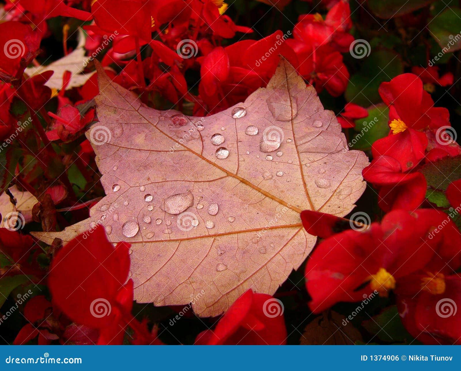 Het bloembed van de herfst