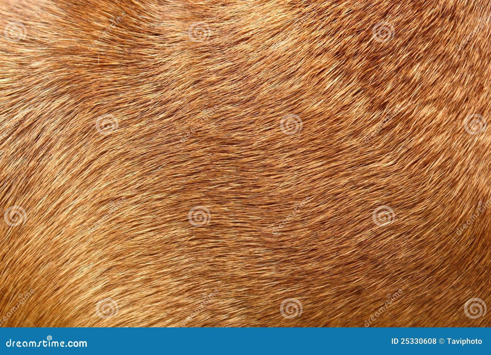 Het bont van de hond