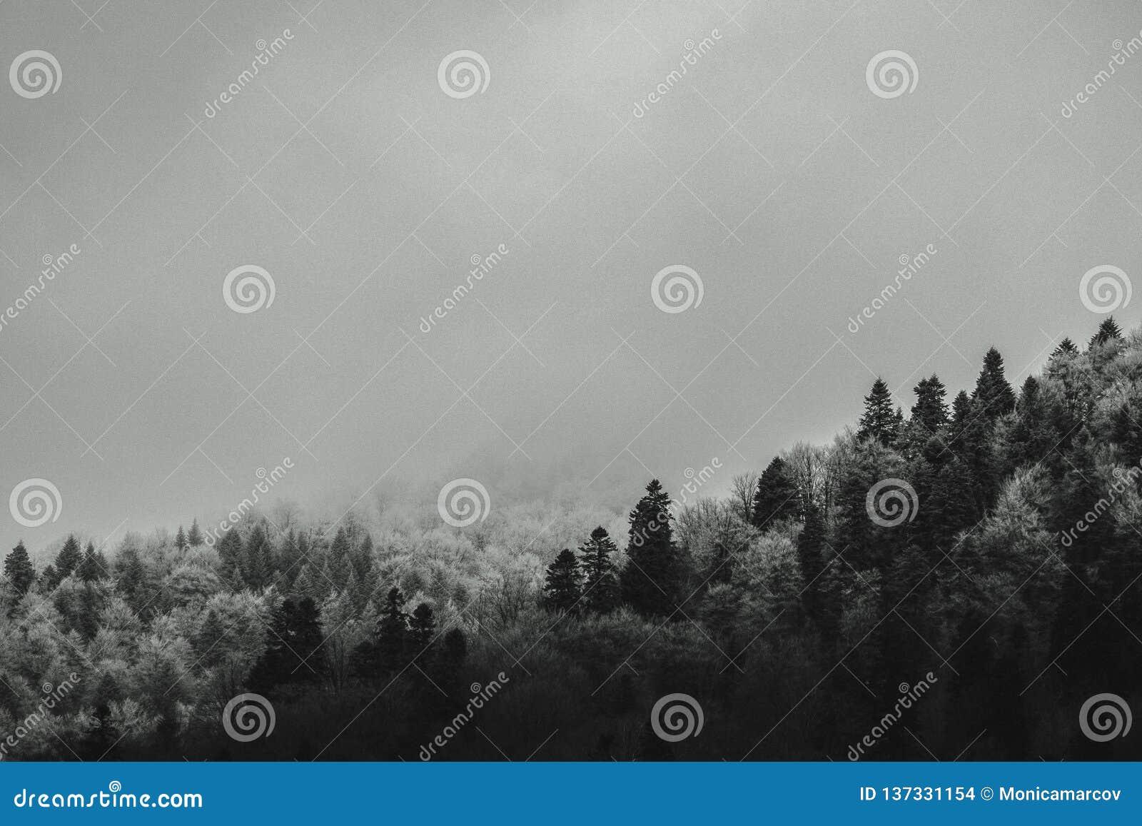 Het bos van de basisberg in ochtendmist die wordt behandeld