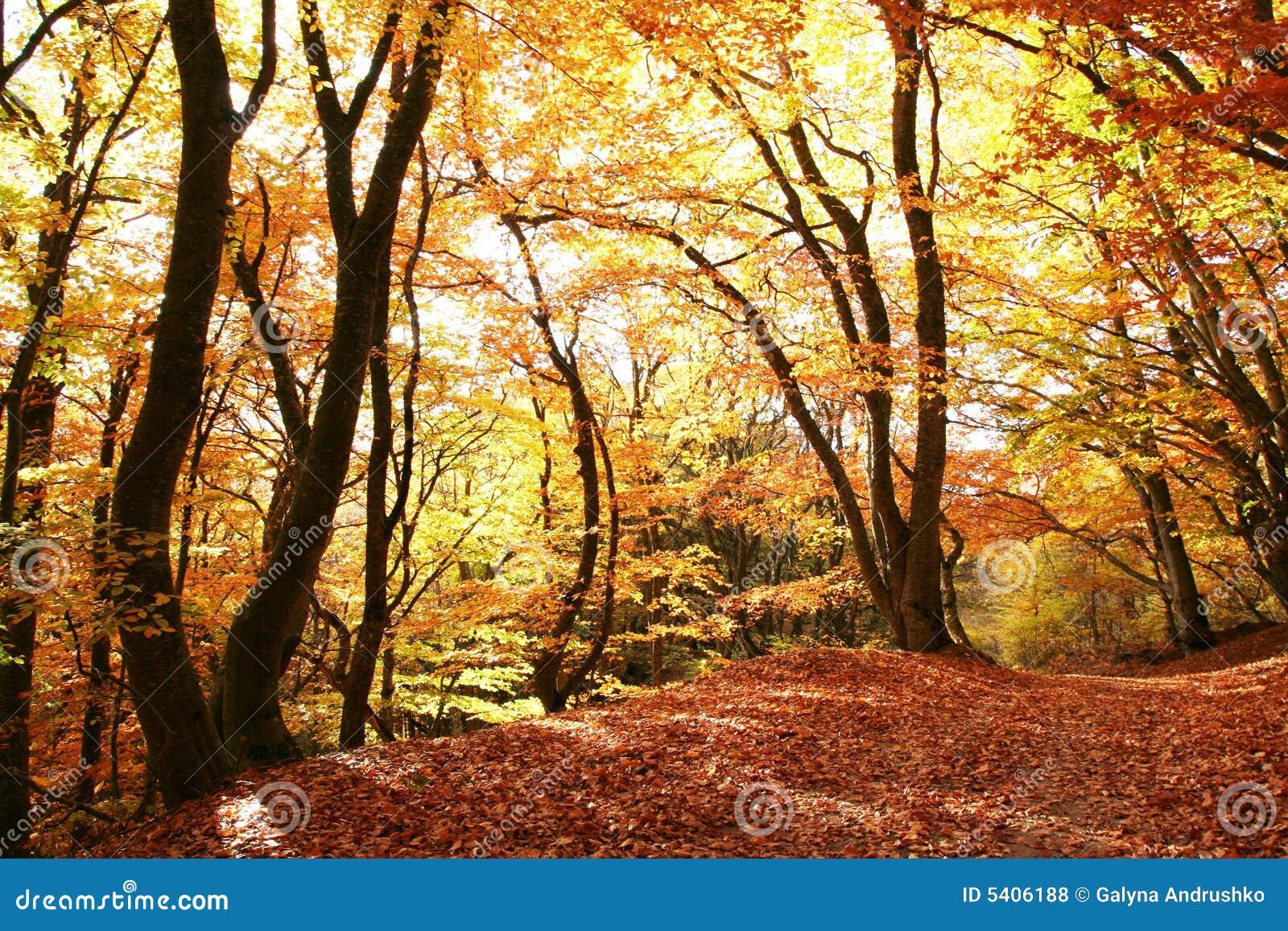 Het bos van de herfst