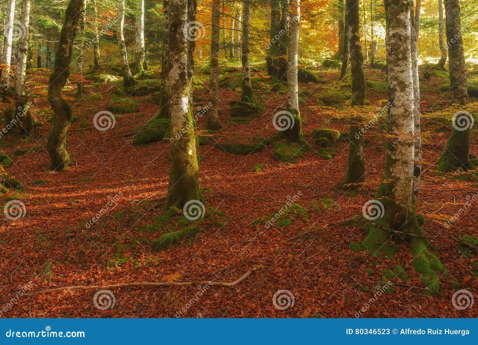 Het bos van de Iratiherfst