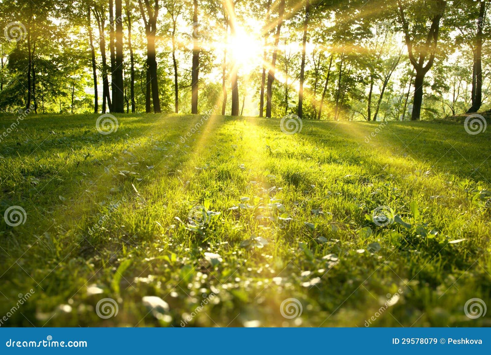 Het bos van de lente
